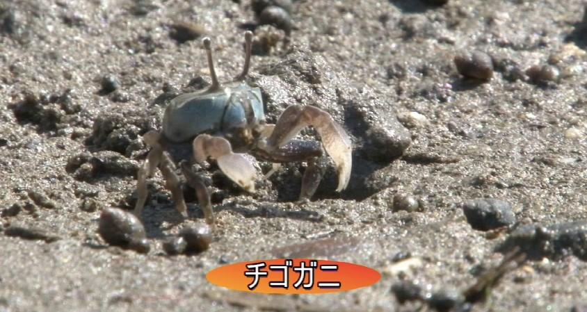 (映像教材では、藤前干潟の生き物たちの生息する姿が豊富に紹介された)